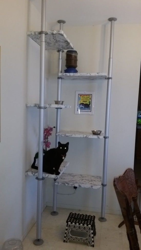 cattree001a